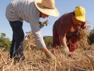 VÍDEO SAÚDE - Preconceito e agricultura sustentável